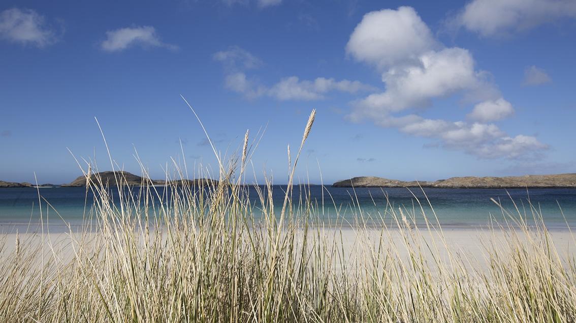 Marram grass in front of an Atlantic beach