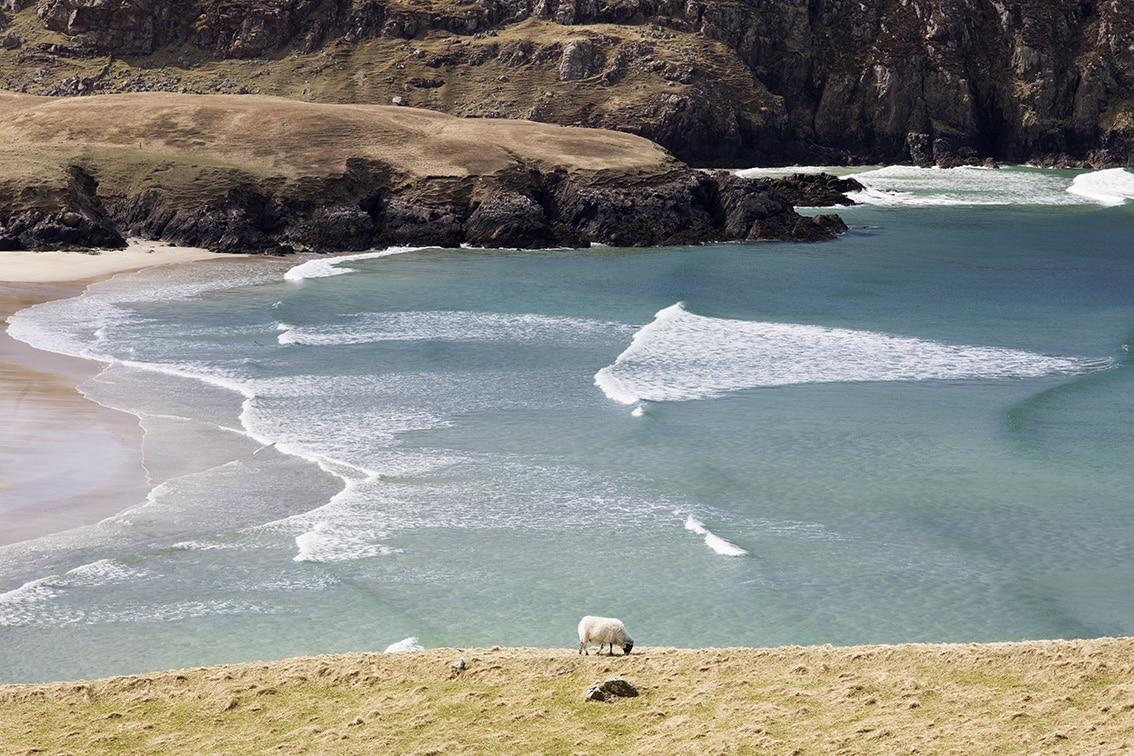 A grazing sheep in front of Valtos beach