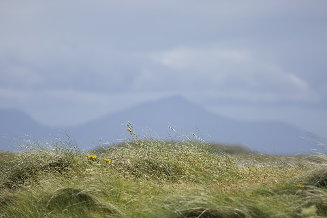 Beautiful machair on the Monach Isles