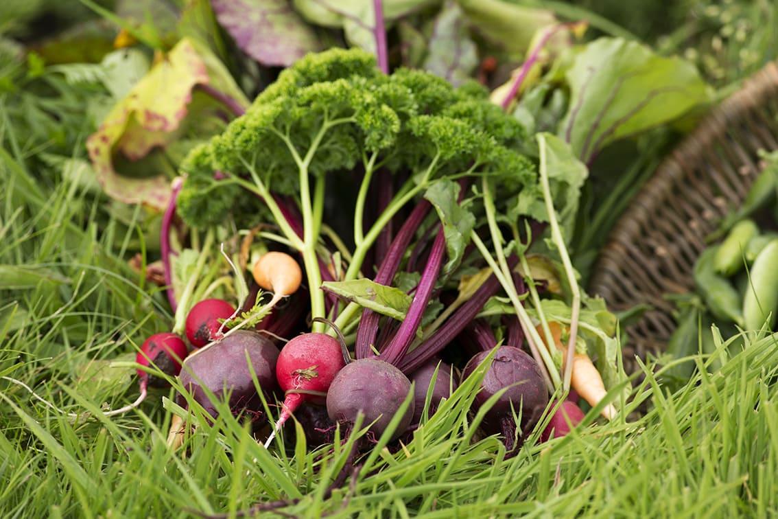 Fresh veg from the garden