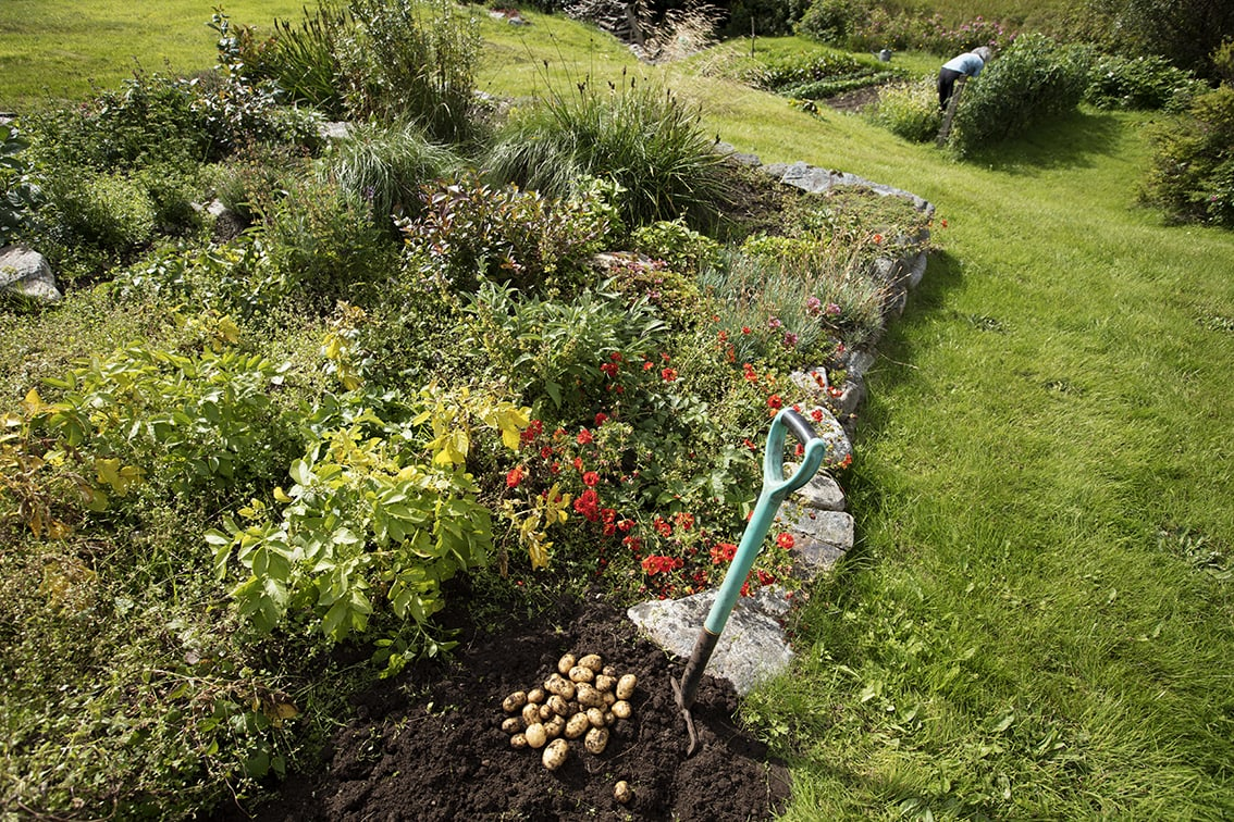 One of our vegetable patches