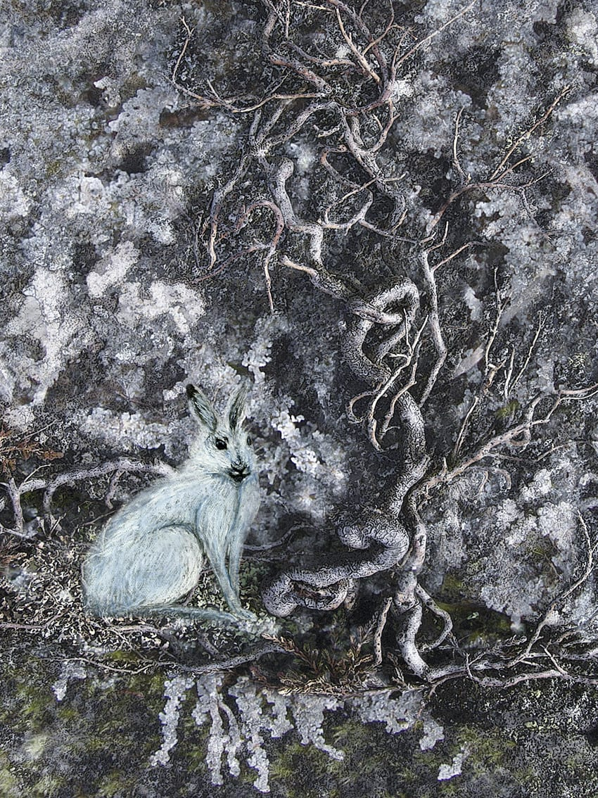 Hare Illustration by Alice Starmore