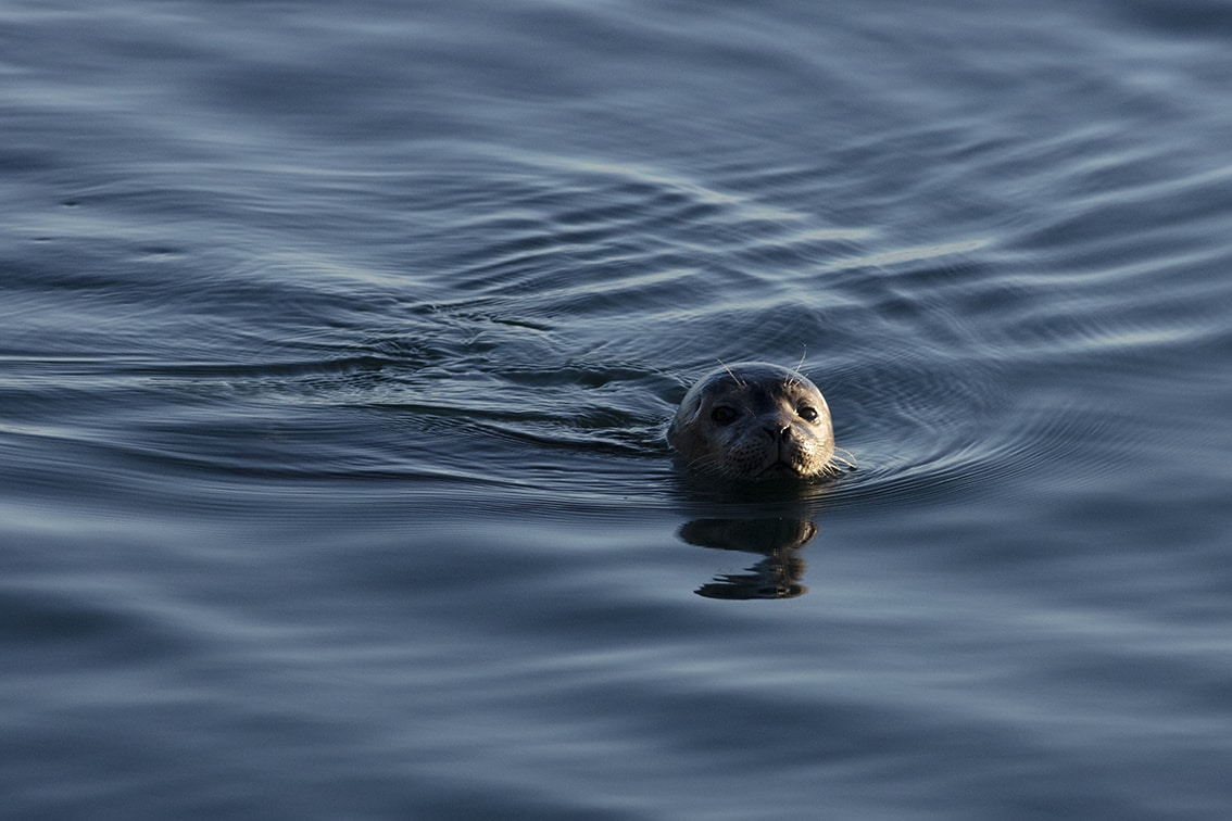 Young seal on the shoreline