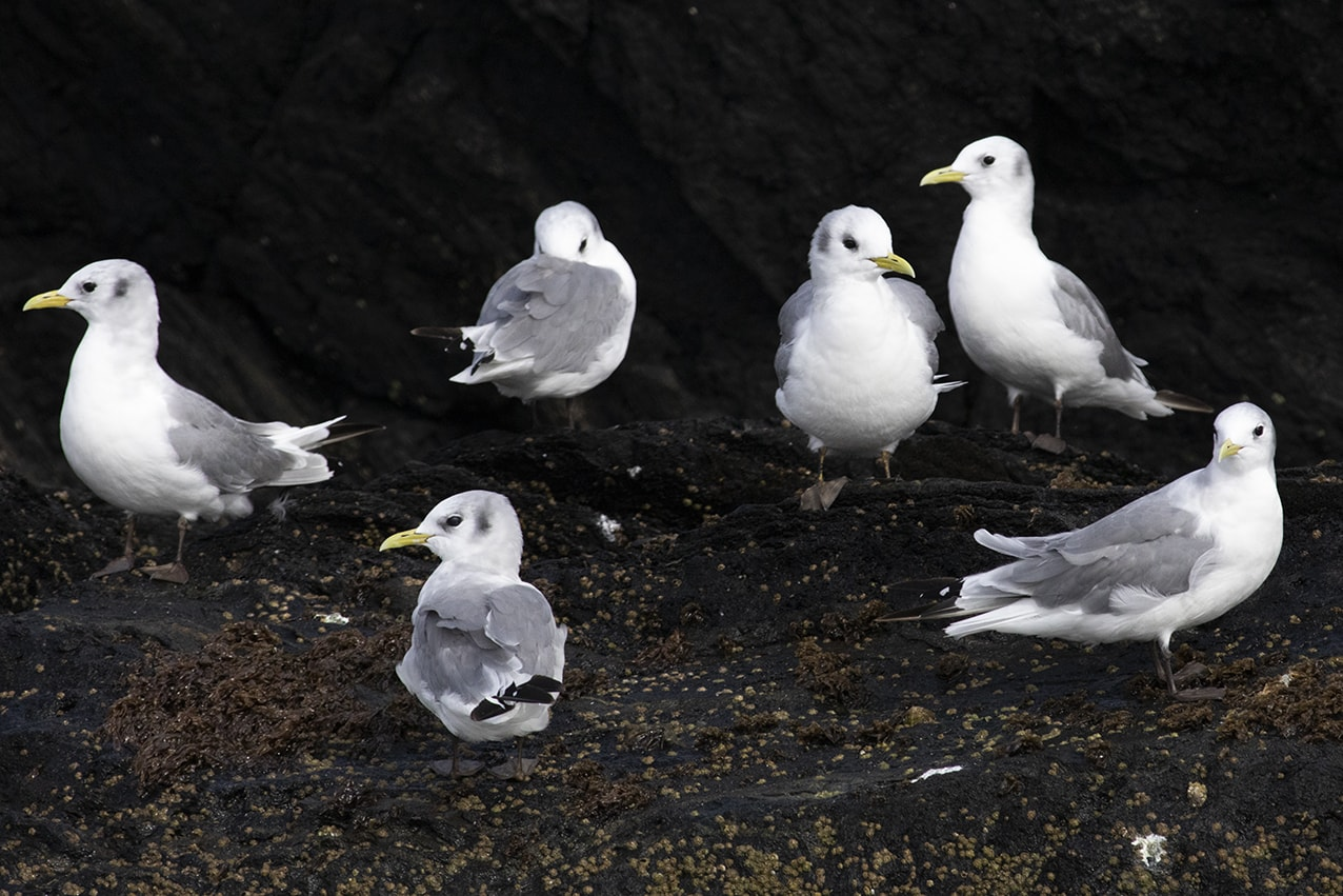 Birdlife in the Outer Hebrides