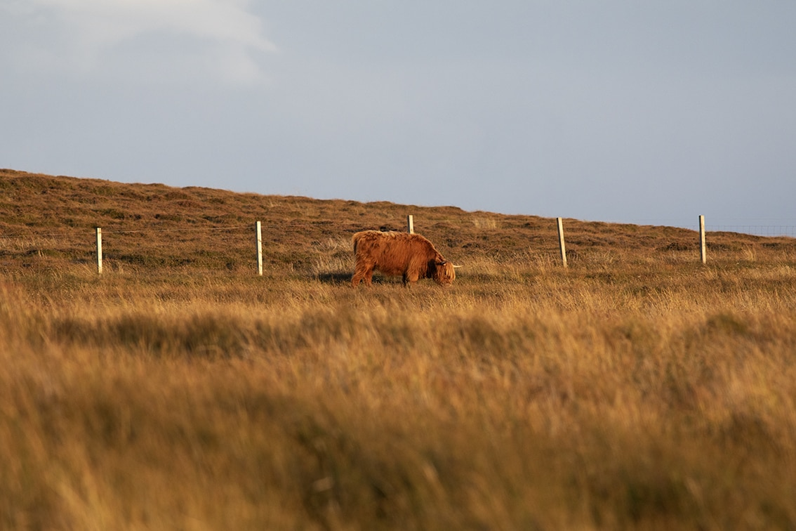 Changing Seasons on the croft and garden